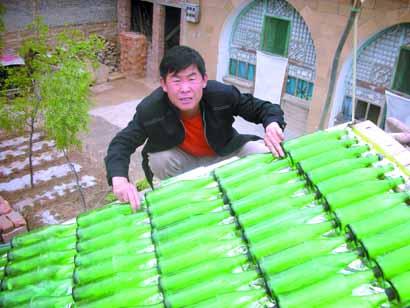 Solar beerbottles