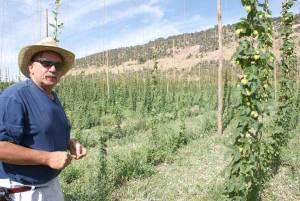 Glen Fuller's organic hop farm